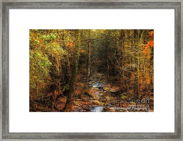 Winter Color Framed Print