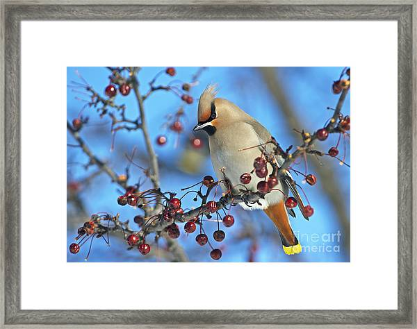 Winter Colors.. Framed Print