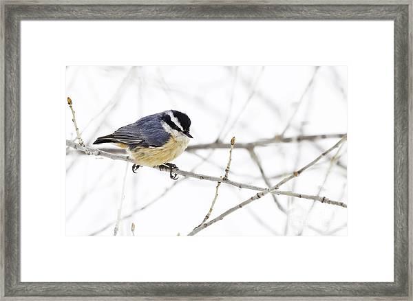 Winter Day Framed Print