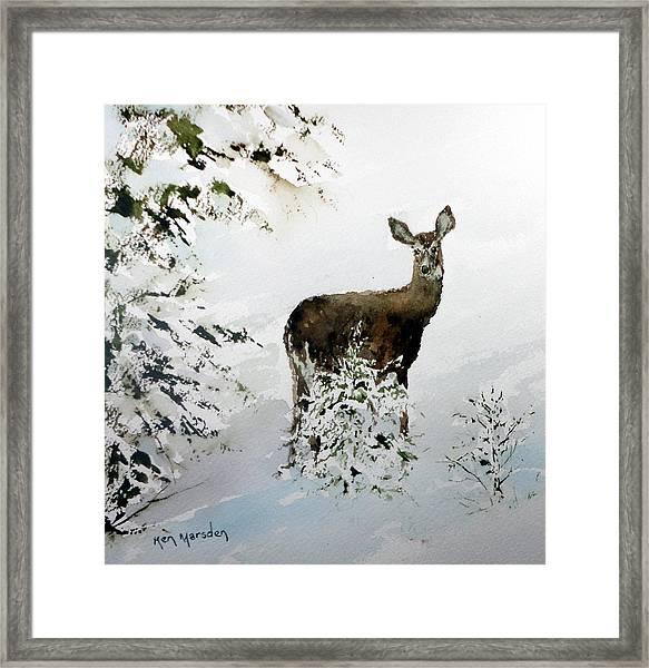 Winter Deer Framed Print