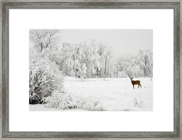Winter Doe Framed Print