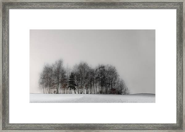 Winter Forest Framed Print by Gilbert Claes