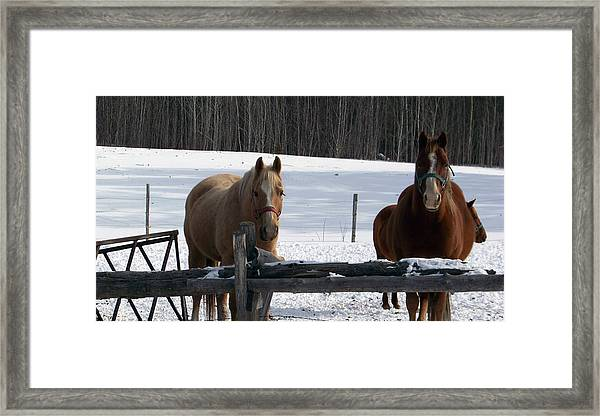 Winter Horses Framed Print
