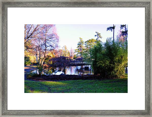 Winter In Beacon Hill Park Victoria Bc Framed Print