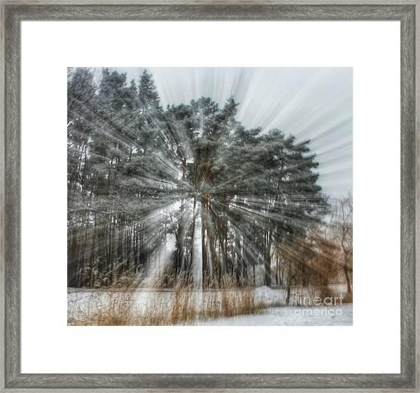 Winter Light In A Forest Framed Print
