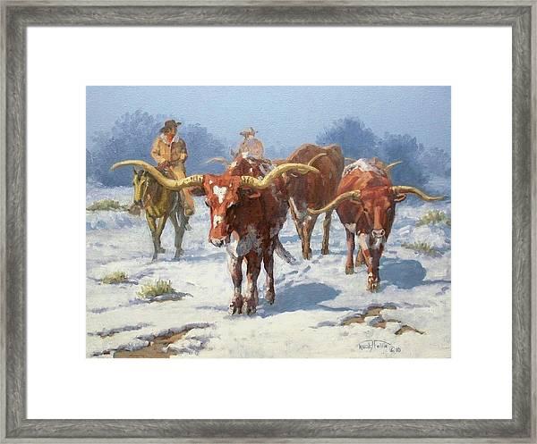 Winter Longhorns Framed Print