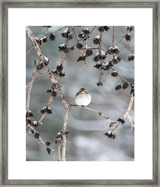 Winter Mockingbird Framed Print