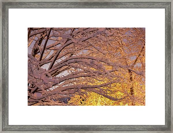Winter Morning Framed Print