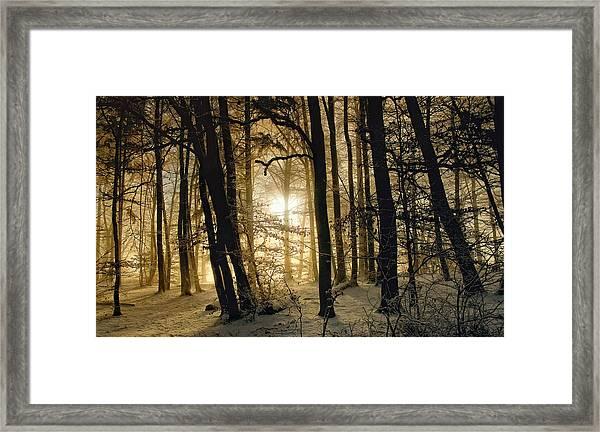 Winter Morning Framed Print by Norbert Maier