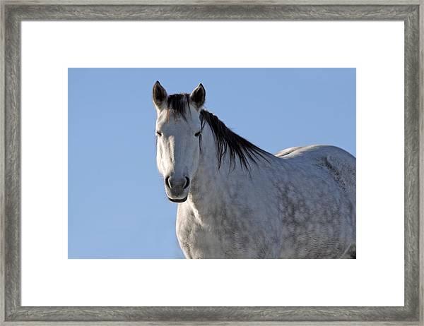 Winter Pony Framed Print