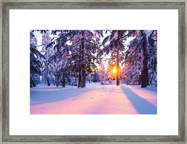 Framed Print featuring the photograph Winter Sunset Through Trees by Priya Ghose