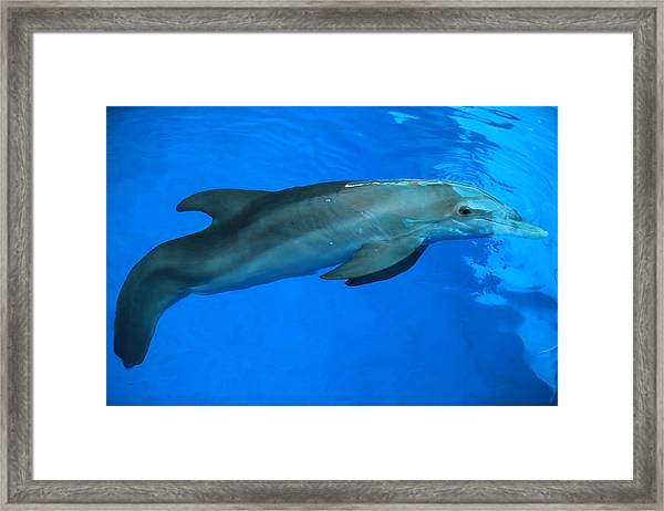 Winter The Dolphin Framed Print