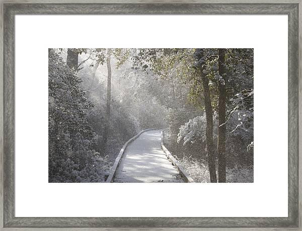 Winter Walk Framed Print