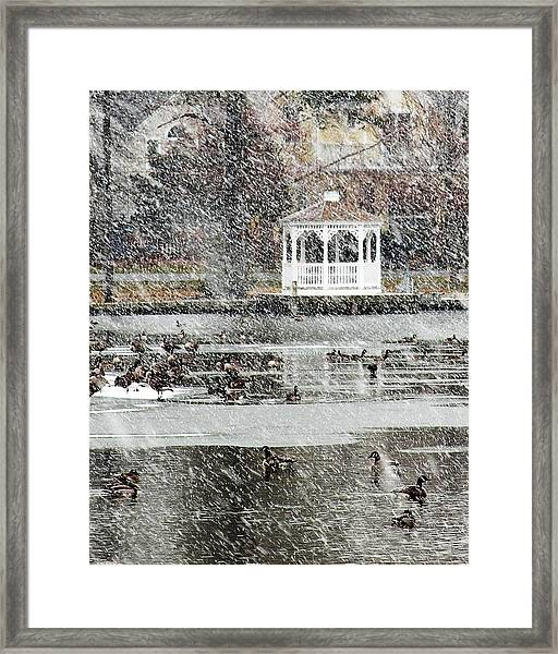 Wintering Geese On Silver Lake Framed Print