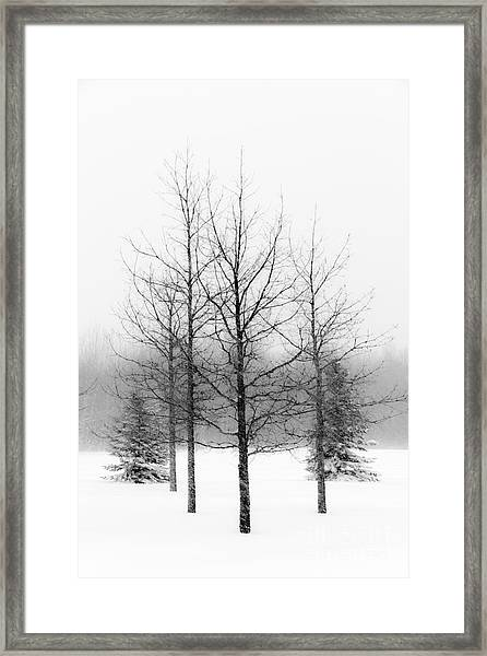 Winter's Bareness  Framed Print