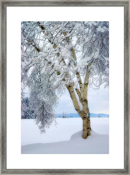 Winter's Dream Framed Print