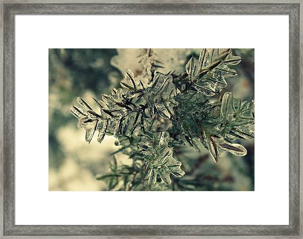 Framed Print featuring the photograph Winter's Freeze by Candice Trimble