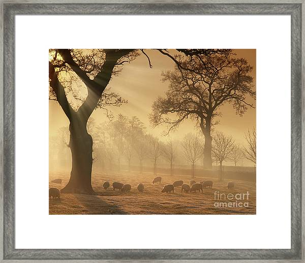 Winter's Gold Framed Print