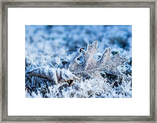 Winter's Icy Grip Framed Print