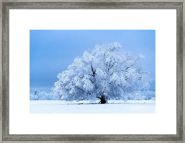 Winter's Majesty Framed Print