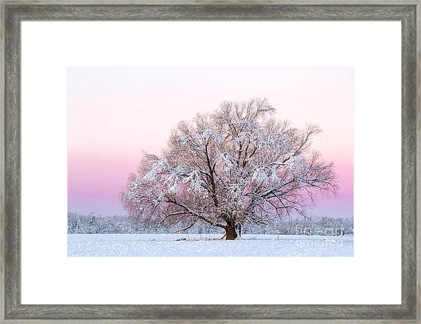 Winter's Majesty Morning Framed Print