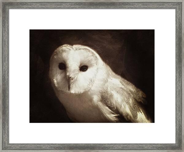 Wisdom Of An Owl Framed Print