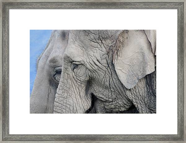 Wisdom With Age Framed Print