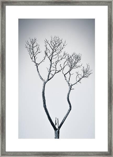 Wishbone Tree Framed Print