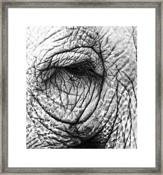 Wishing The Wild  Framed Print