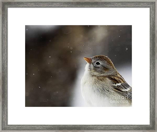 Wishing Upon A Snowflake  Framed Print