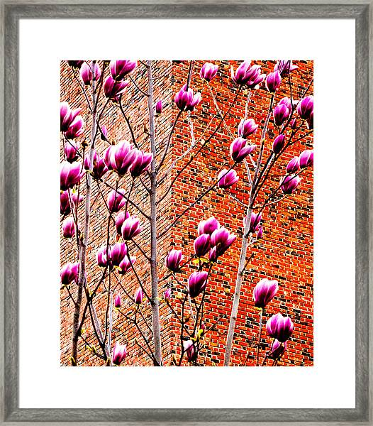 Wishwise Blossoms And Bricks 2013 Framed Print