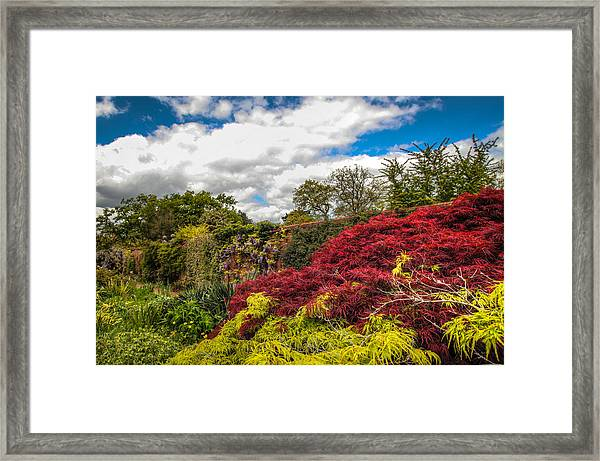 Wisley Garden Wall Framed Print