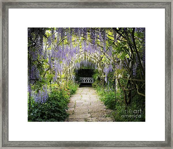 Wisteria Archway  Framed Print