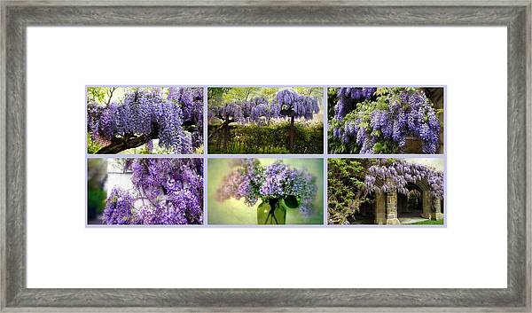 Wisteria Collection Framed Print