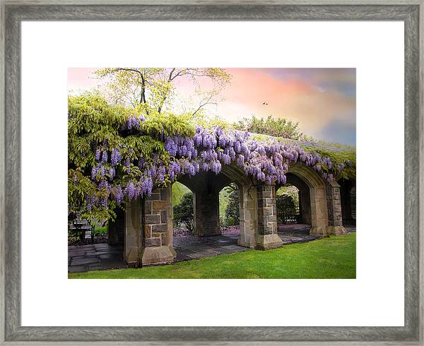 Wisteria In May Framed Print