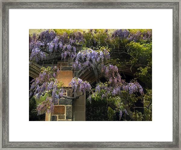 Wisteria Vine Framed Print