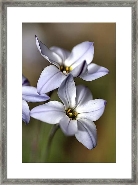 With Company Framed Print