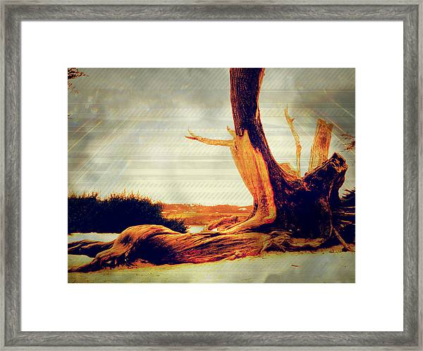 Withstanding The Storms Framed Print