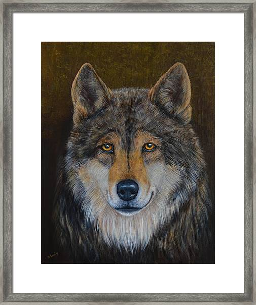 Wolf Alpha Framed Print