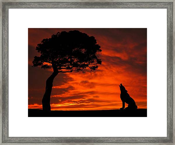 Wolf Calling For Mate Sunset Silhouette Series Framed Print
