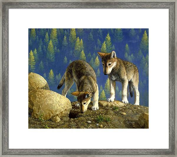 Wolf Pups - Anybody Home Framed Print