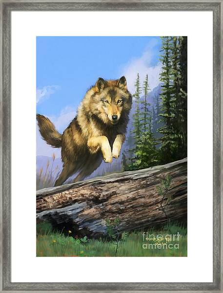 Wolf Run Framed Print