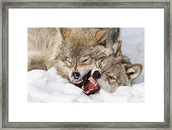Wolves Rules Framed Print