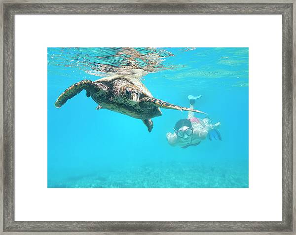Woman Diving With A Hawksbill Sea Framed Print by 4fr