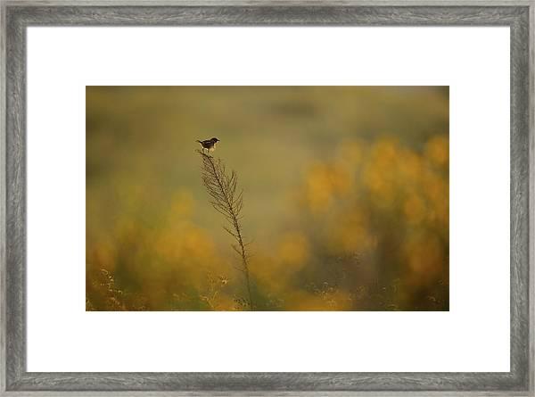 Wonder Land Framed Print