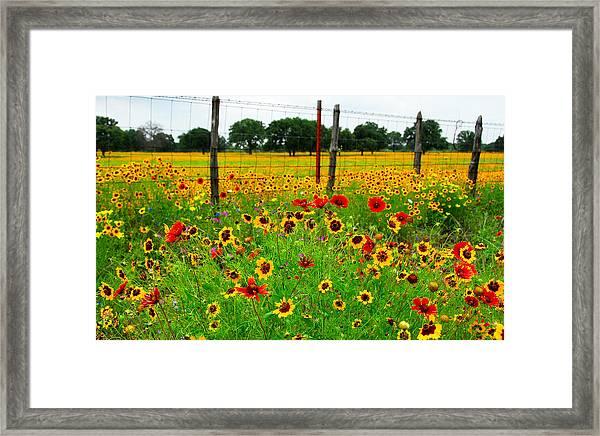 Wonderful Wildflowers Framed Print