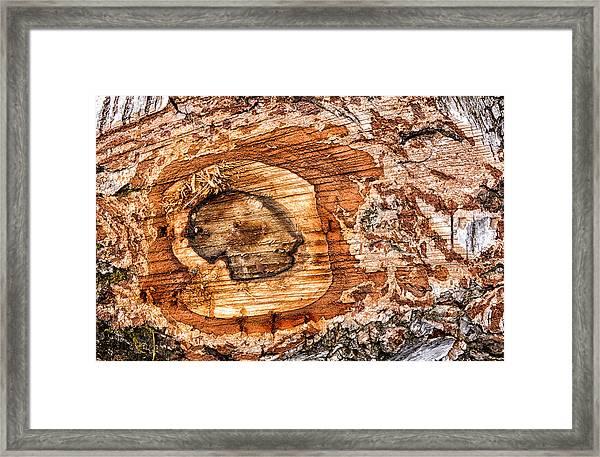 Wood Detail Framed Print