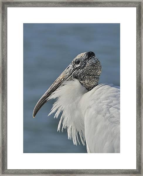 Wood Stork Portrait Framed Print