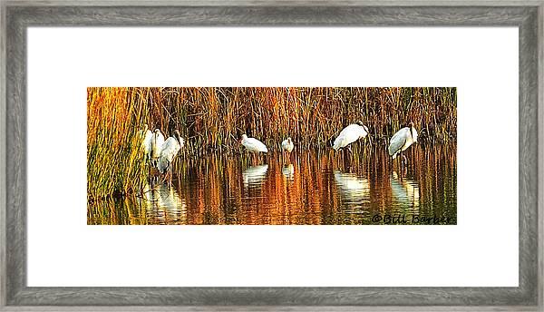 Wood Storks And 2 Ibis Framed Print