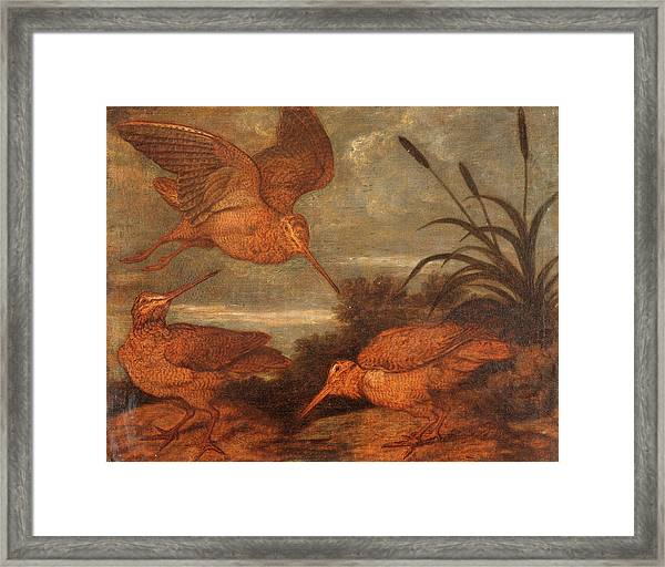 Woodcock At Dusk, Francis Barlow, 1626-1702 Framed Print by Litz Collection